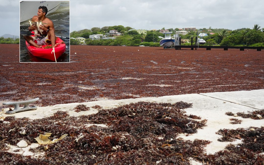 Seaweed causing a stench on northern beaches